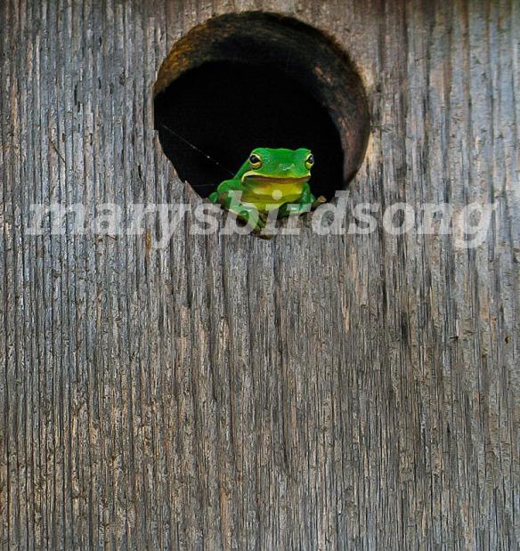 frog2001name001