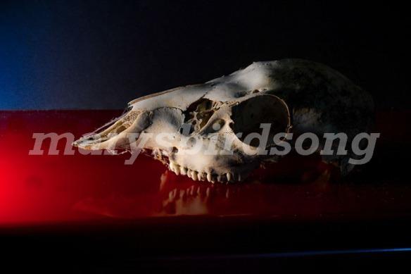 skull4name001