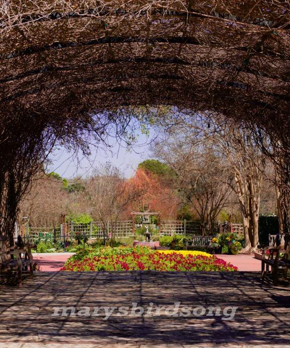 bot garden arborname size001