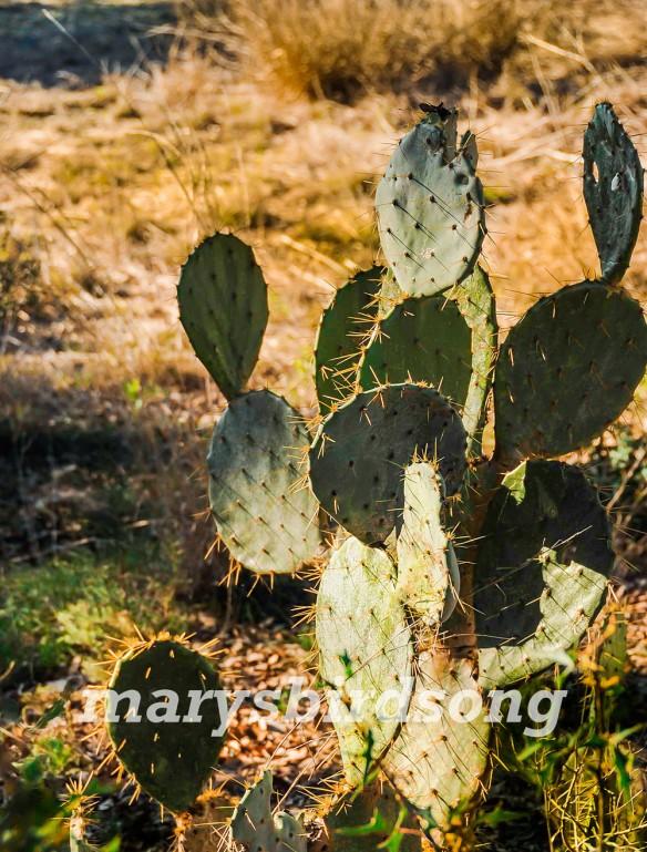 cactus1name001