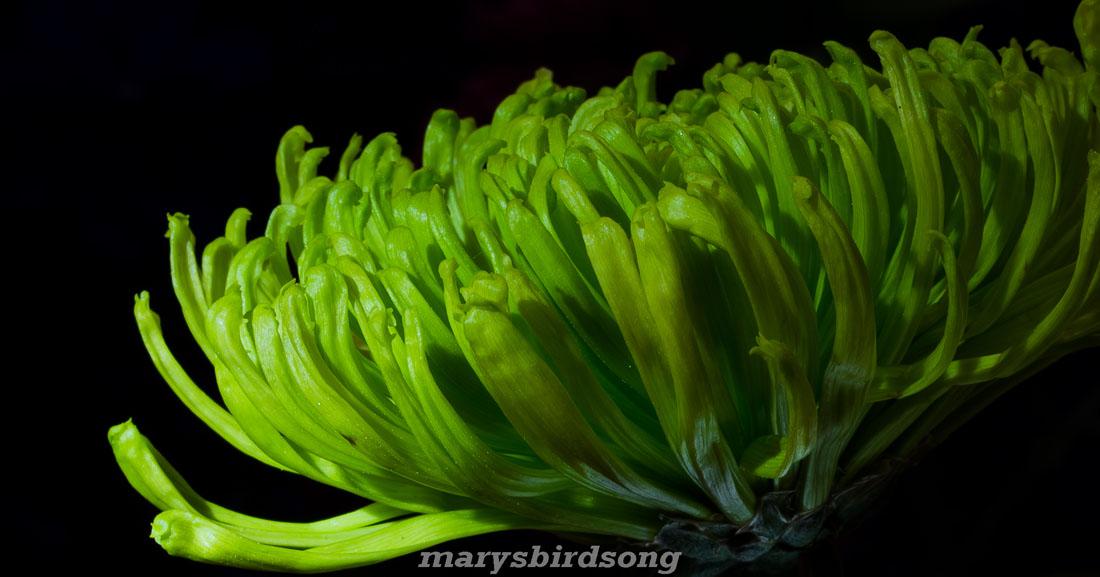 greenflower3sizename001