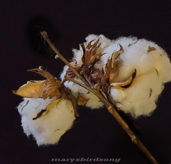 cottonnamesize001