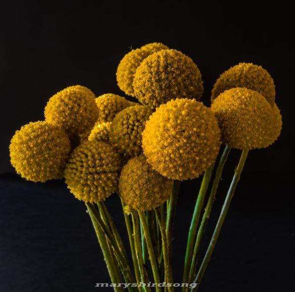 yellow flowerballs3uprightnamesize001