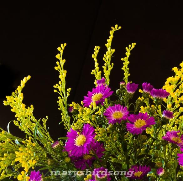purplecornflowernamesize
