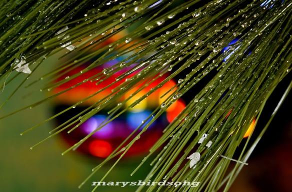 christmascard2013namesize001