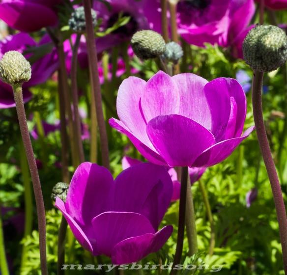 pink tulip likenamesize