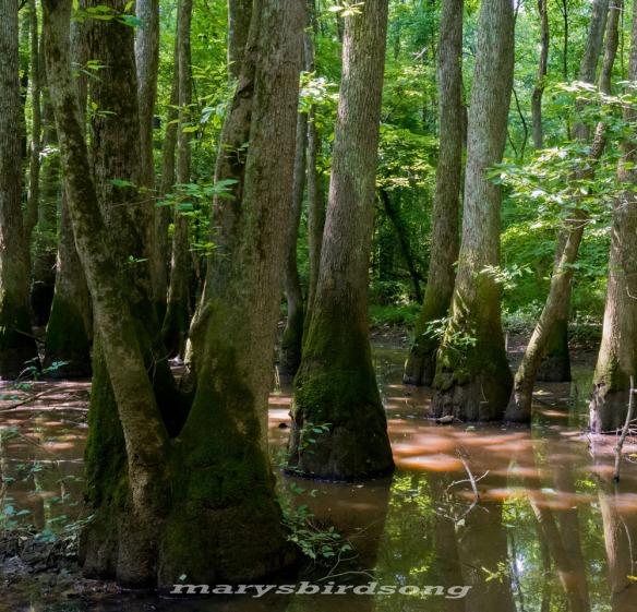 jacksonswamp2namesize001