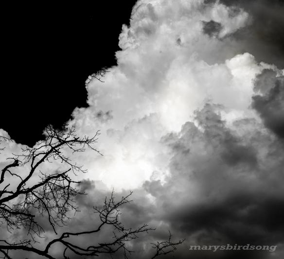 black-skycloudnamesize