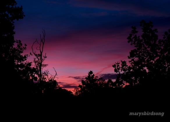 sunrise2-653amnamesize